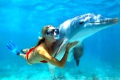 Swimming with Dolphins- Mexico