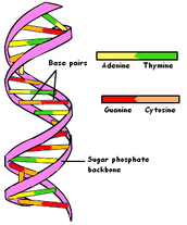 To Understand How Genetic Engineering Works, One Must Understand the Basics...