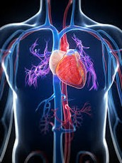What is the Circulatory System?