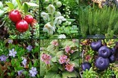 Plants and Their Adaptations