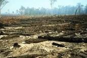 Deforesta ción