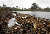 How are people polluting the Bay?