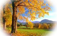 Vermonts Foliage