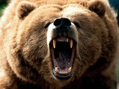 Injuries and Deaths done to Bears