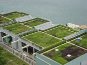 Green Roofs is the solution