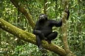 ביערות הגשם חיים קופים