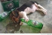 Alcohol Hotline