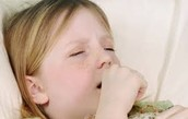 Transmission of Whooping Cough