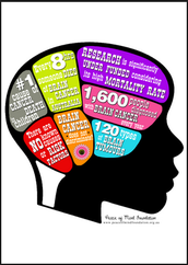 Basic Facts About The Brain