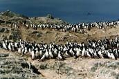 Los Pingüinos Natural