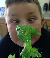 Celery Science!