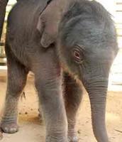 Baby Navann