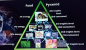 Trophic Level Diagram/ Food Web