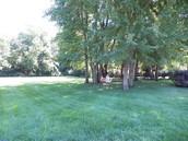 Amazing Yard