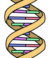 7:00 AND 7:30 DISCOVERING DNA