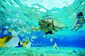 3. Snorkeling - In Florida at Key West