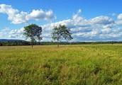 What makes it a Grassland?