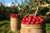 Hillcrest Orchards trip on October 26