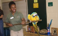 Learning about a beautiful macaw!