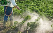 Poisoning With Pesticides
