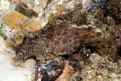 Two Organisms- Sea Hare