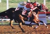 fast race horse