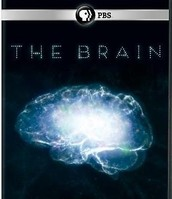 The Brain - PBS Series on DVD
