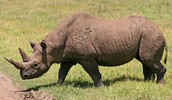 ¿por que hay animales en peligro de extinción?