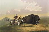 A Single Kiowa Tribe Member Hunting Buffalo.