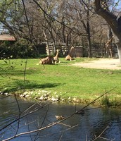 Giraffe Water Source