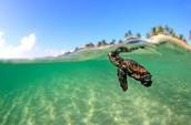 """l""""ocean!!!!"""