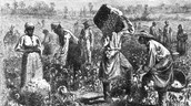 Farming slaves