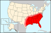 What two climate characteristics have led to dense vegetation in the South?