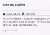 pets classifieds