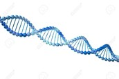 Double helix structure of DNA.