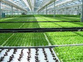 3 types of hydroponic systems