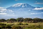 Mt Kilimanjaro