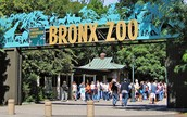 All about the Bronx Zoo