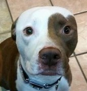 Angus - available for adoption through TRP