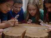 Climate Study: Tree Ring Lab