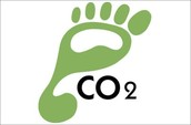 What an Ecological Footprint is, and the Factors that Effect it