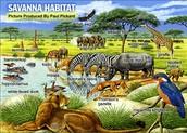Savanna's animal habitat