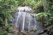 A water fall in the El Yunque Rainforest.