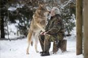 A man kissing a wolf