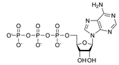 ATP Chemical Structure