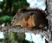 Why Squirrel Removal Can Be A Professional Job