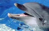 דולפין מחכה לאוכל