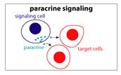 Short Distance - Paracrine