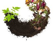 the Cycle of Compost