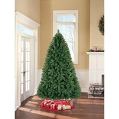 Unlit Christmas Trees - Bring the Family Together